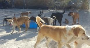 Imagen de archivo de las instalaciones del servicio de recogida de animales. Foto: TV Baena.