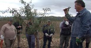 Imagen de archivo del curso de poda de almendro impartido por el Ifapa en Baena en noviembre de 2018. Foto: TV baena