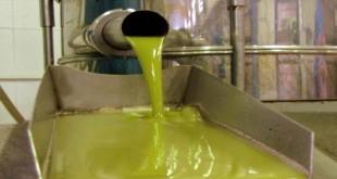 Aceite de oliva virgen extra de una almazara de la DOP Baena.