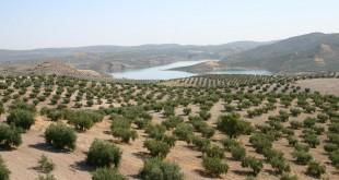 Paisaje de olivar en la comarca del Guadajoz y Campiña Este. Foto: Adegua.