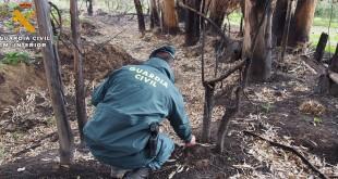 Un agente del SEPRONA de Baena investigando el incendio forestal ocurrido en el paraje del puente de 'La Muturra'. Foto: Guardia Civil.