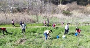 Voluntarios de Groden-Ecologistas en Acción trabajando en la reforestación del cerro del Minguillar. Foto: TV Baena.