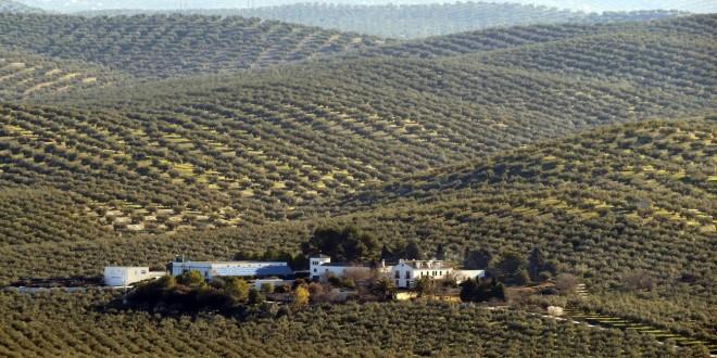 Un cortijo entre 'un mar de olivos' en el término municipal de Baena. Foto: Cortijo Suerte Alta.