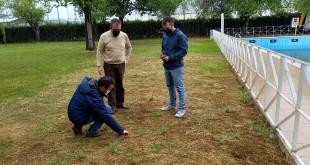 Técnicos municipales comprobando el estado del césped de la piscina de Albendín. Foto: Ayuntamiento de Albendín.